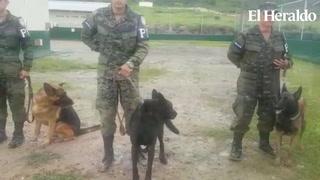 Honduras, único en Centroamérica que forma agentes caninos