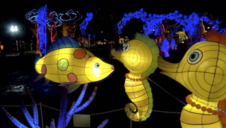 Top 5 Must-See Light Displays at Magical Winter Lights