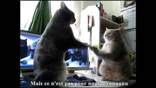 "Cats Sing ""Dansons La Capucine"""