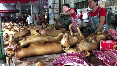 Perros en el menú del festival chino de carne canina