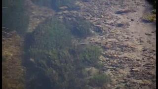 Hallan extraña rana gigante en Perú