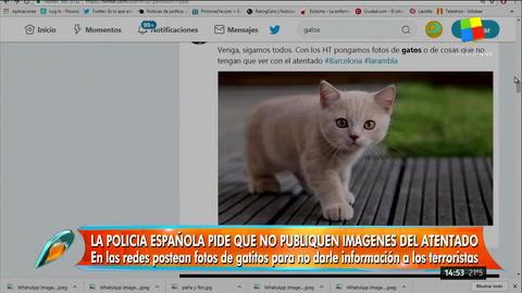 ¿Por qué las redes sociales se llenaron de gatitos tras el atentado en Barcelona?