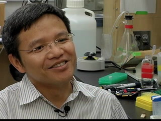 FSU biologists uncover 'Mahjong' gene