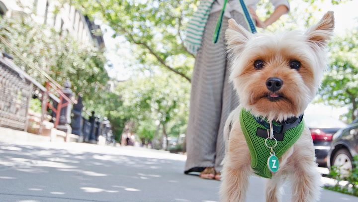 These Are the 5 Most Dog-Friendly Cities in America