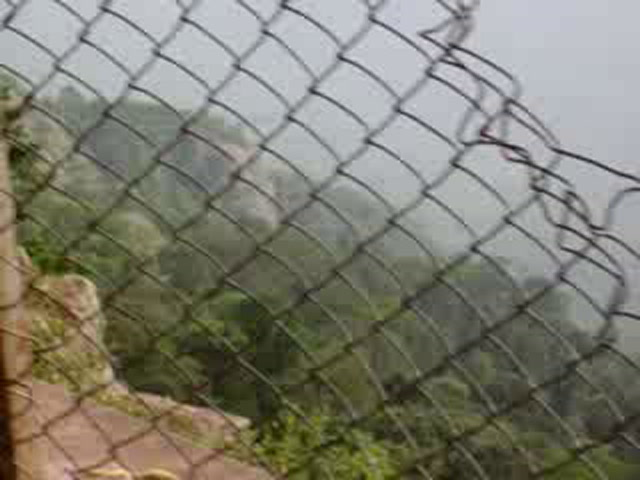 Yercaud Videos-monkey pranks