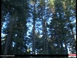 بہار کا موسم آگیا۔۔۔ لینڈ سلائیڈنگ روکنے اور موسمی تغیرات سے بچنے کیلئے زیادہ سے زیادہ درخت لگائیں