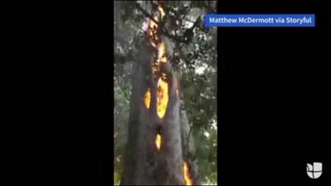 Enorme árbol se quema por dentro en California, EE UU