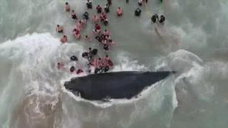Liberan a ballena varada en Ecuador por 11 horas