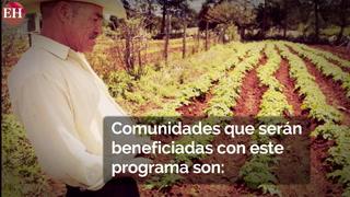 Distrito Central cosechará granos básicos durante todo el año