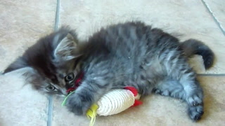 Happy Kitten Playtime Part 2 (Kitten Tv)