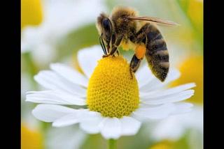 Alertan por ataques de abejas