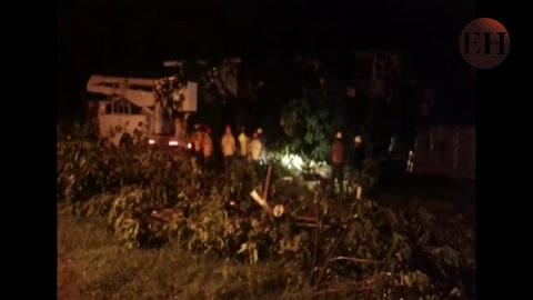 EEH Honduras atiende caída de árbol en San Pedro Sula