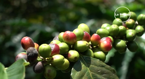 Familia hondureña vende café en parque de Disney