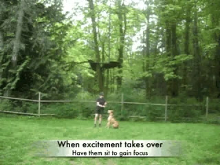 Fun Dog Training   The Leg Weave (Caninemanagement.Ca)