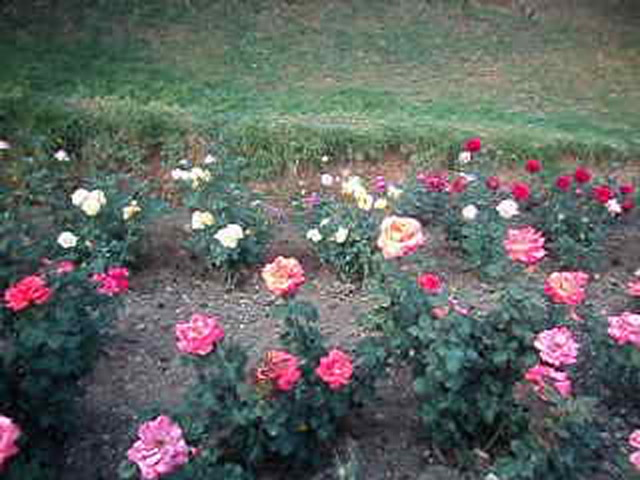 Ooty Videos-Beautiful Flowers at Ooty Botanical Garden
