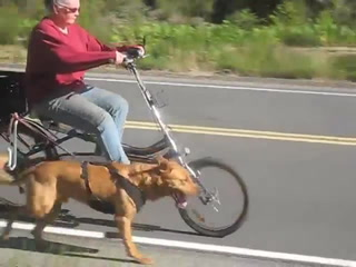 Riding A Bike With Your Dog With The Springer Bike Attachment (Caninemanagement.Ca)