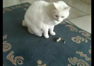 Kitten Surprise   Funny Cat Fight (Kitten Tv)