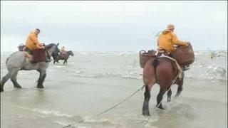 La pesca a caballo en Bélgica, una tradición única