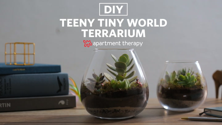 How To Make A Terrarium Apartment Therapy