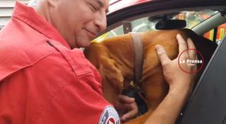Titan el perro rescatista que ah salvado a más de 20 personas