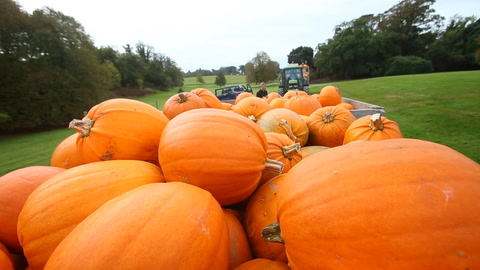 Video: Tenth annual Pumpkin Festival set to draw the crowds to Castle Ward