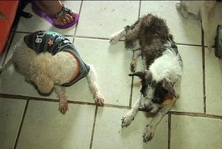 Castigo por maltratar mascotas