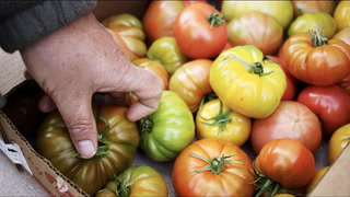 "Neal Brooks and Abby Lee Farms Are Growing the ""Greatest Tomatoes in the World"" in South Phoenix"