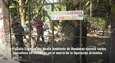 En operación Artemisa recuperan animales en peligro de extinción