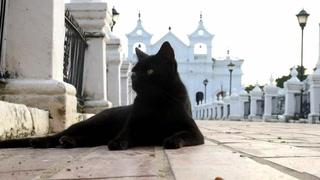 ¿Pacto con el diablo? Gatos cuidan tumbas en pueblo colombiano