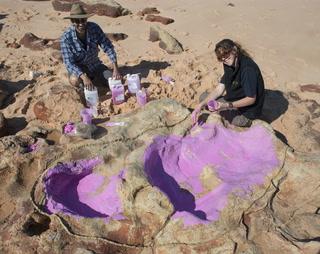 Identifican huellas de 21 especies de dinosaurios en Australia