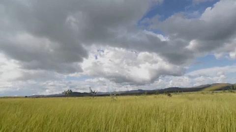 Semillas contra la deforestación, el reto de un parque nacional de Brasil