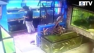 Joven roba en acuario; saca peces en bolsas del pantalón