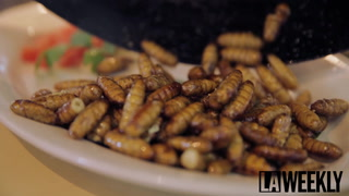 Coala Valley Farm Thinks Crickets Are the Future of Food