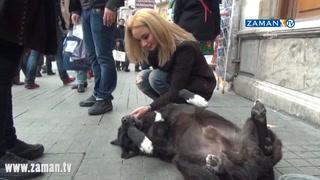 Taksim'de ölü takliti yapan köpek şaşırttı