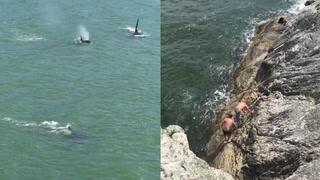 Saltadores se llevan el peor susto de su vida con tres orcas