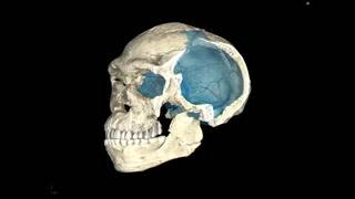 Descubren en Marruecos los restos del homo sapiens más antiguo
