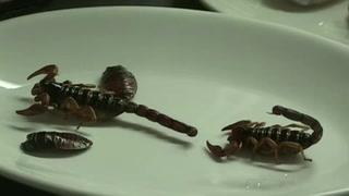 Escorpión y cocodrilo para recuperar la comida prehispánica