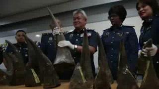 Incautan cuernos de rinoceronte valuados en tres MDD