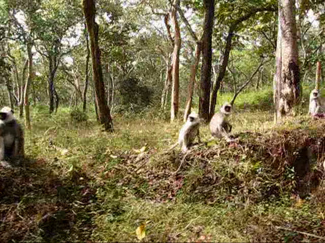 Bandipur National Park Videos-A forest trip
