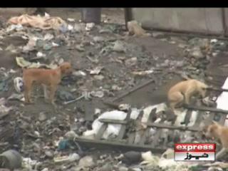 کراچی میں عوام کا آوارہ کتوں کی بہتات کیخلاف انوکھا احتجاج
