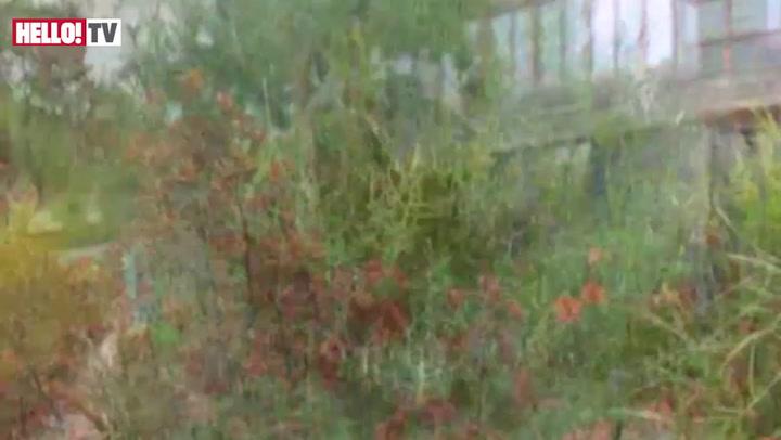 The Australian Garden at the Chelsea Flower Show 2011