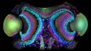 FSU finds beauty under the microscope