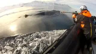 Cámaras en ballenas desvelan su vida en Antártida