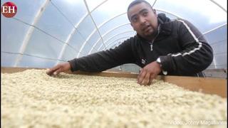 Asociación Compartir cultiva solidaridad a través del grano de café