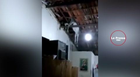 Burro cae del cielo y asusta a una familia en Brasil