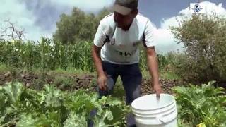 En el cultivo de maíz ya no se gana: campesino
