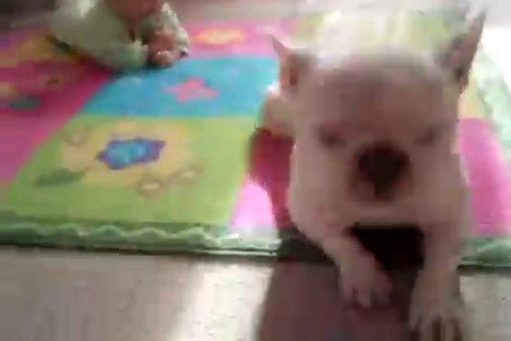 Bambini che gattonano: i video più divertenti della rete