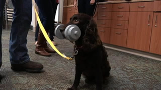 Florida State fitness study pairs man's best friend with seniors