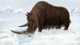 Woolly Rhino fossil tells new tale in Earth's evolution