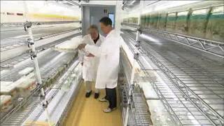 Bayer ofrece 62 MMD por Monsanto